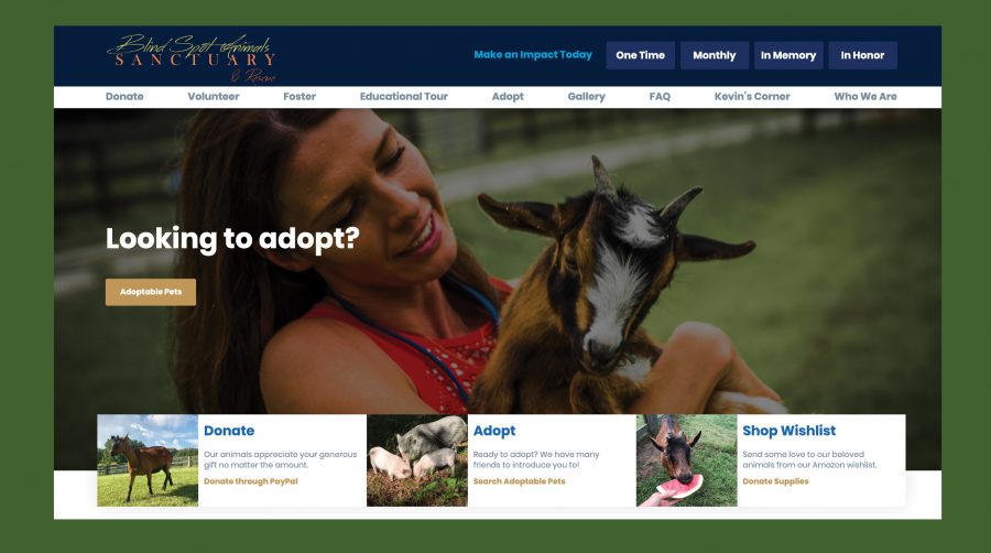 Blind Spot Animal Wordpress Website Redsign
